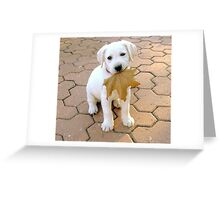 Patriotic Puppy Greeting Card