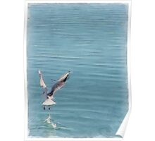 Seagull over the water Poster
