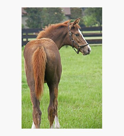 Thoroughbred Filly Looking back Photographic Print