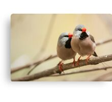 Long-tailed finch Canvas Print