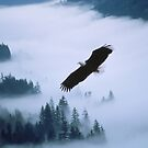 Bald eagle soars over foggy forest by printscapes