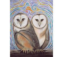 Pair of Barn Owls Photographic Print