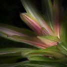 Lovely In The Light by CarolM