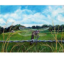 Dragonfly on barbed wire Photographic Print