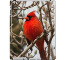 Cardinal in Pussy Willow iPad Case/Skin