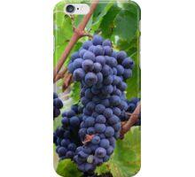 Tuscany grapes iPhone Case/Skin