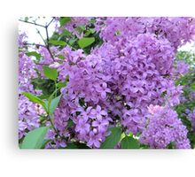 The Fragrance of Lilacs Canvas Print