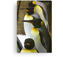 Tuxedo Crowd - King Penguins Canvas Print