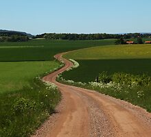 Cricket Dirt Road by Madeleine Forsberg