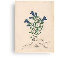 James Bolton, active , Liverpool Gentian with One Insect Canvas Print