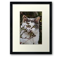 cute cat in the garden Framed Print