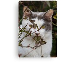 cute cat in the garden Canvas Print