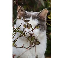 cute cat in the garden Photographic Print