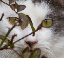 cute cat in the garden Sticker