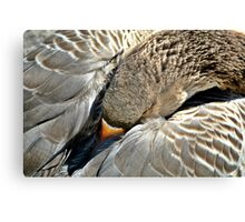 Snoozing Goose Canvas Print