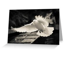 The flight of a white dove Greeting Card