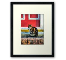 Pets - Tabby Cat by Red Door Framed Print