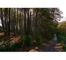 Woodland Backroad Photographic Print