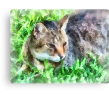 Tabby Cat Closeup Canvas Print