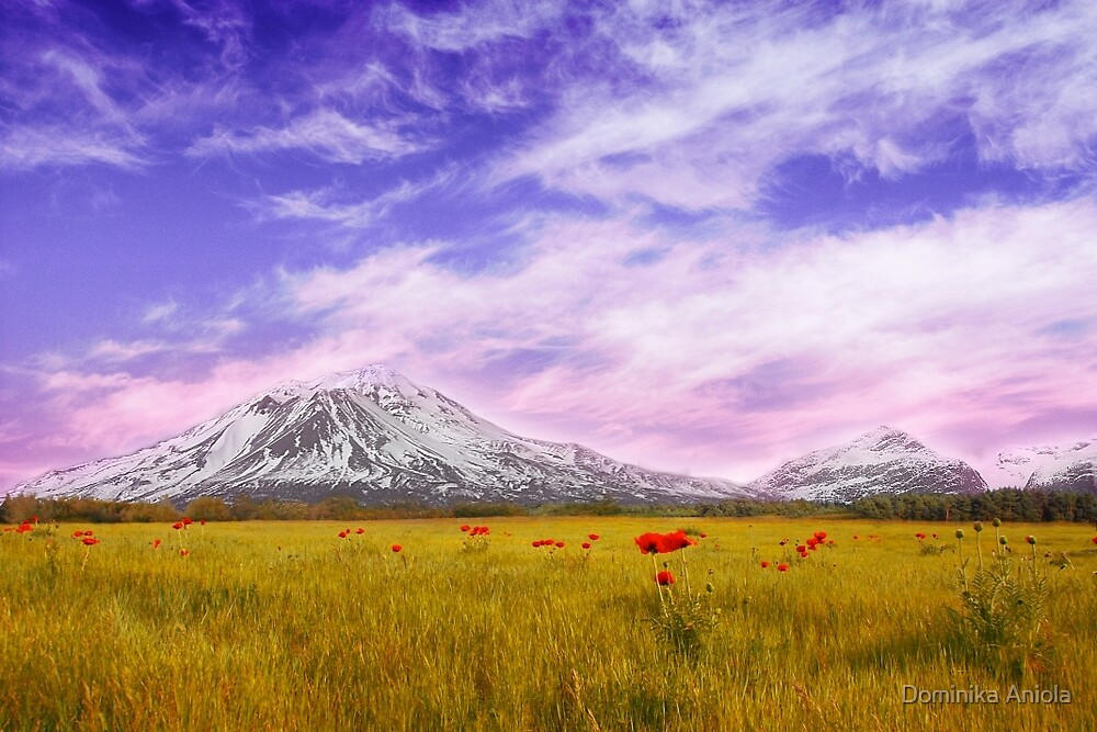 Field of poppies by Dominika Aniola