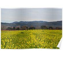 Napa Valley Mustard Flowers Poster