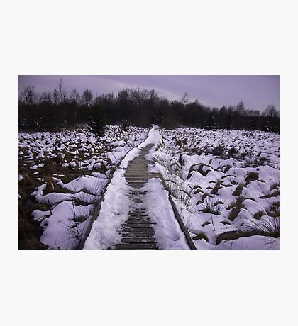 Winterpath - Nature Photography Photographic Print
