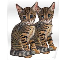 Bengal Kittens: Color Pencil Drawing of CATS Poster