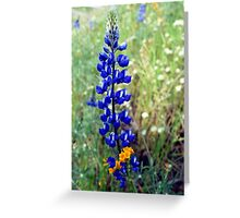 Spike Lupine Greeting Card