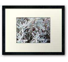 Hidden Ladybird  Framed Print