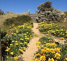 Flower walk to ninety mile beach by Sarah Trett