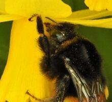 Spring bee Sticker