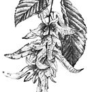 Hornbeam botanical pencil sketch by Sarah Trett