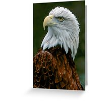 Eagle Posing  Greeting Card