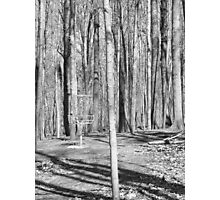 Black And White Disc Golf Basket Photographic Print