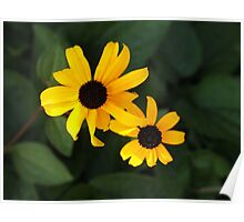 Black Eyed Susan Duo Poster