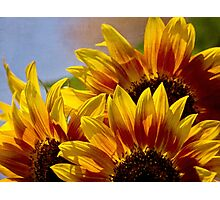 Sunflower tapestry Photographic Print