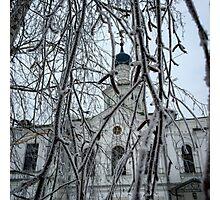 Frozen birch tree Photographic Print