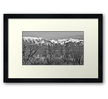 Between the Trees Framed Print