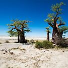 Baobabs At Kubu by Shaun Colin Bell
