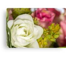 One white rose Canvas Print