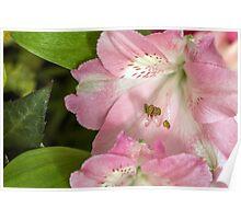 Flower blossom Poster