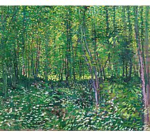1887-Vincent van Gogh-Trees and undergrowth Photographic Print