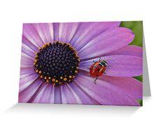 Ladybug on purple flower Greeting Card
