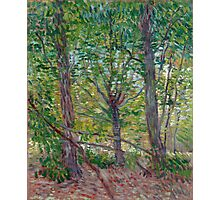 1887-Vincent van Gogh-Trees-36x46 Photographic Print