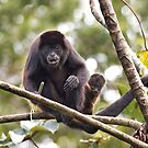 Howler monkeys - Costa Rica by Jim Cumming