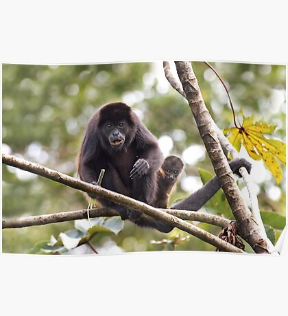 Howler monkeys - Costa Rica Poster