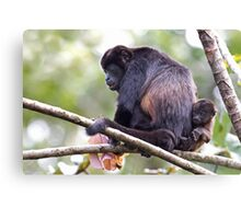 Howler monkeys - Costa Rica Canvas Print