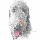 wolfhound w/a flower drawing by Mike Theuer