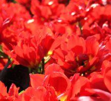 Close to Tulips Sticker