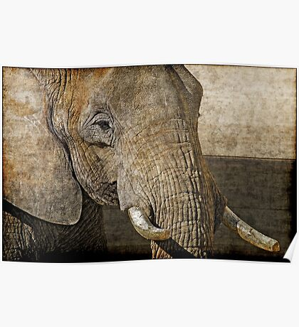 Big five: African elephant Poster